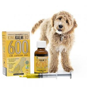 Is CBD Safe for Dogs and  Cats? 1