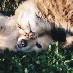 Is CBD Safe for Dogs and Cats?