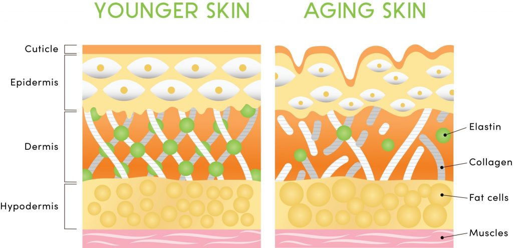 Your Super Plant Collagen Support 1